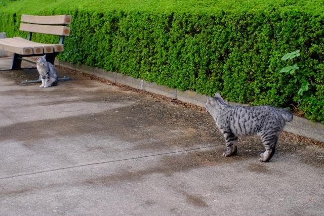 外出のある猫