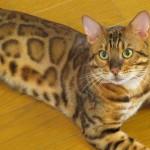 動物病院によってここが違う! 猫の避妊手術の方法(1)