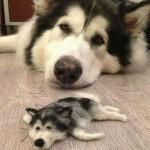 犬の偽妊娠にお困りの方へ。飼い主がとるべき4つの選択肢。