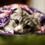 猫避妊で手術後の抜糸は必要?抜糸するならいつが最適?