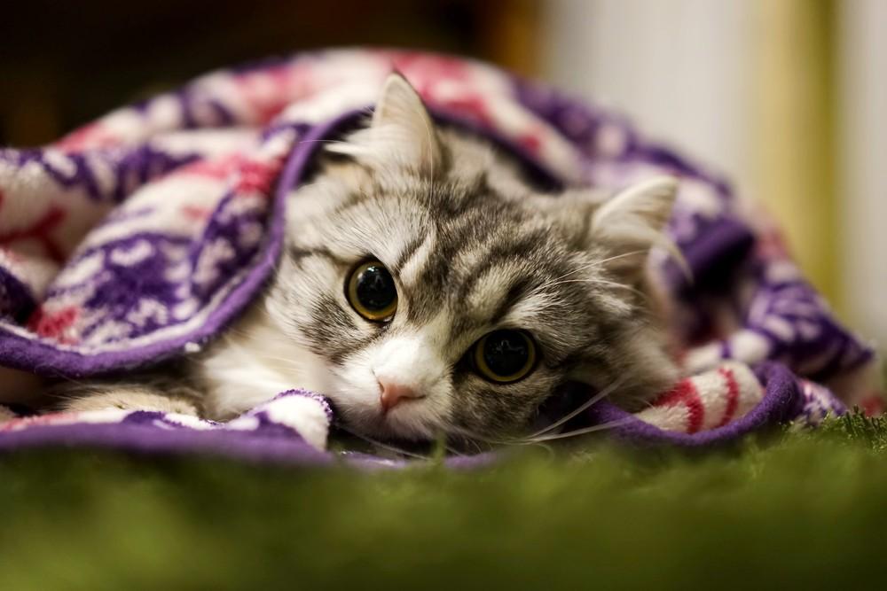 避妊 抜糸 猫 手術