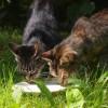 不幸な野良猫を増やさない、避妊手術の活動。