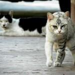 野良猫を飼う前に!知らなかった野良猫の3常識。