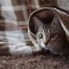 未去勢のオス猫が布団におしっこ。これって本当にマーキング? 見極めるべき3つのポイント。