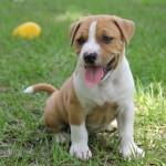 咬み犬になる原因は人か犬か? 犬種によって異なる飼い主の姿勢と去勢のススメ。