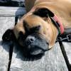 犬を動物病院に連れていく3つの方法とは?怖がる犬にならないために。