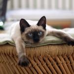 仔猫を飼う前に確認しておきたい3つのコト