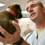 どこまで必要?犬の避妊手術の術前検査。