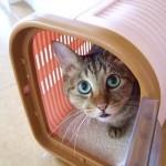 怖がりな猫でも大丈夫!動物病院で猫を安全に診察させるための3つのコツ。