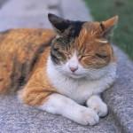 【高齢猫の悩み】年をとっても、メス猫の避妊手術は可能?必要?
