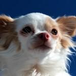 焦らないために、犬の生理について知っておきたい知識。