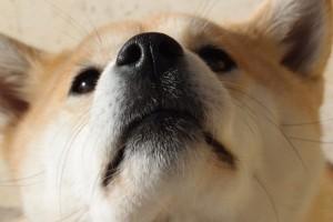 ダブルコートの犬種