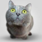 【メス猫の避妊手術は日帰りできるか?】うちの子は入院させたくないんです!