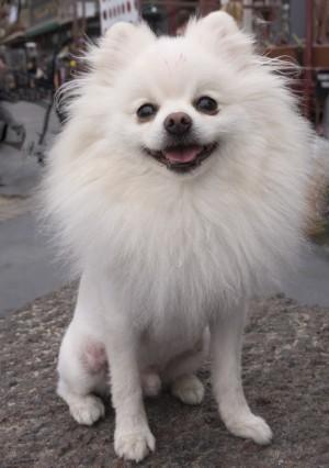 毛刈りをした犬