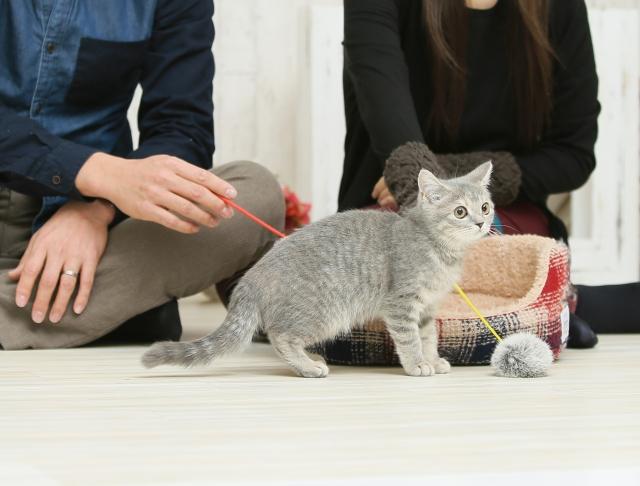 子猫と遊ぶ飼い主