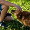オス犬の去勢手術は必要?するべきか?予防できる病気とは?