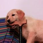高齢なメス犬の避妊手術。手術をする上で気をつけたい5つのこと。