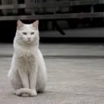 去勢手術後のストレス行動。やっぱり猫は繊細な生き物!!