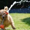 暑い時は手術を避けるべき?夏に犬の避妊手術を考えている飼い主へ。