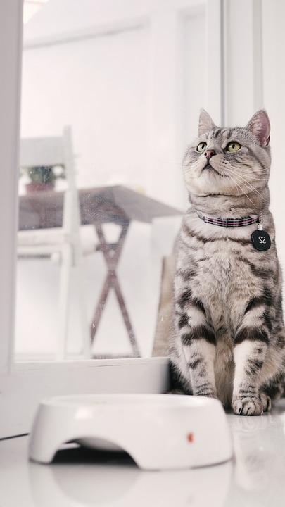 ごはんを待つ猫