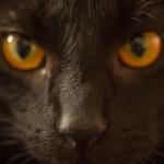 【オス猫の去勢手術】術後のよくある5つの勘違い