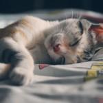 猫の去勢手術後の3日間の日常生活。