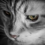 猫の去勢手術・結局のところ、なんでやらないといけないの?