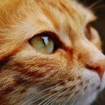 メス猫の避妊手術後の抗生剤が原因の困った出来事。