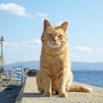 オス猫では見つけにくい停留睾丸とは?