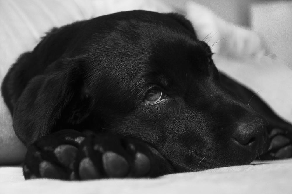 体調不良の犬