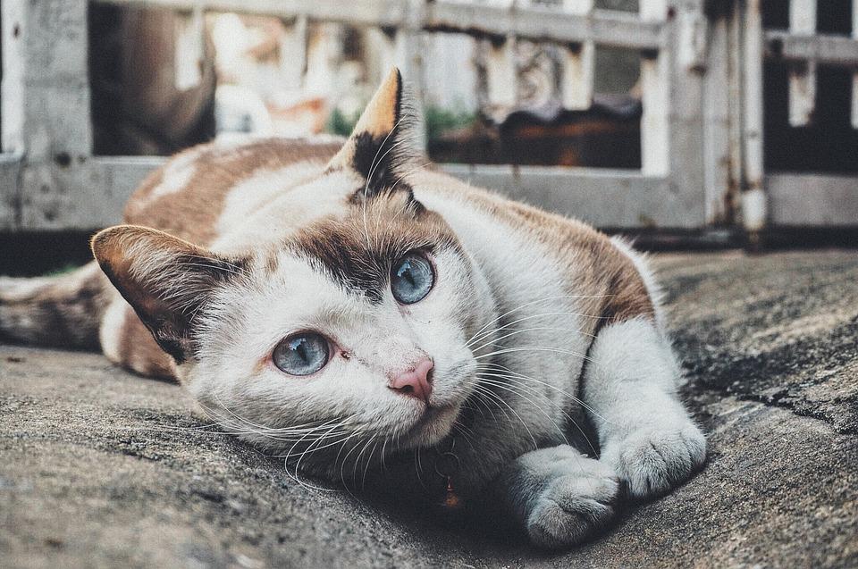 cat-1209067_960_720
