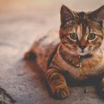 動物病院に行くまでの移動の間で気をつけてあげたい猫のこと。