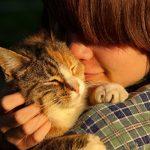 一人暮らしの飼い主がオス猫と上手に暮らすポイント
