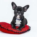 メス犬の避妊手術後、シャンプーはいつできる?