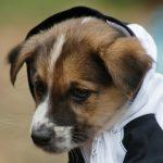 去勢手術をしていれば良かった…と飼い主が感じる、オス犬が遭遇する4つのトラブル