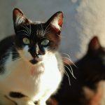 猫が動物病院から帰ったら、同居している猫に起こること【オス猫の去勢】