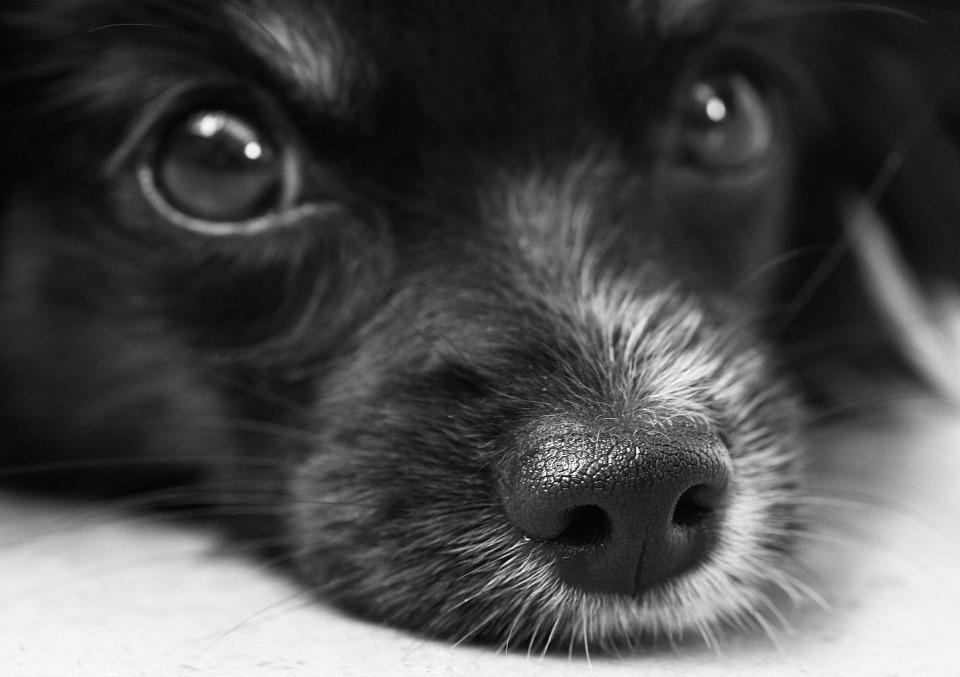 dog-187817_960_720