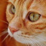 獣医師が解説。去勢手術を迎えた猫の数日間。