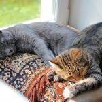 【多頭飼い入門】新入り猫にしておくべき検査や予防