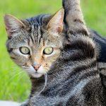 不安を減らせばもっと身近に感じる。野良猫の去勢手術。