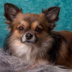 犬の去勢手術の傷の大きさはどのくらい?