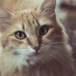 【猫の避妊手術】退院後から調子がすぐれない時の4つの対応法