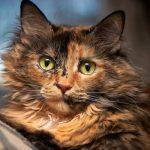 え!?睾丸を取るの?猫の去勢手術の5つの基本事項。