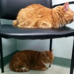 【メス猫】避妊手術と【オス猫】去勢手術。一緒のところと違うところ。