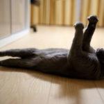 【オス猫の去勢手術】できるだけ料金を安く済ませる方法とは?