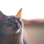 猫同士のケンカによるリスク