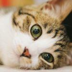 メス猫の避妊手術で性格は変わる?