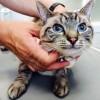 メス猫の避妊手術で手術創の大きさが病院によって違う理由とは?