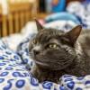 オス猫の去勢手術後に気を付けたい3つのこと。