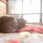 猫避妊をせずに、知っておかないと後悔する3つのこと。